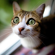 Green Eyes Photos - Cats Eyes by Emmanuelle Brisson