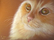 Cat Pastels - Cats Eyes by Renate Dohr