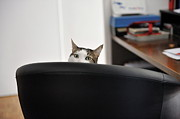 Office Chair Prints - Cats head showing of an office chair Print by Sami Sarkis