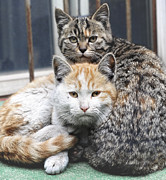 Two Animals Photos - Cats by Jiroyuan photography