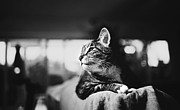 Cats Portrait Print by Sumit Mehndiratta