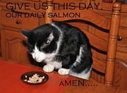 Black And White Cats Posters - Cats Prayer Revisited by Teddy the Ninja Cat Poster by Reb Frost