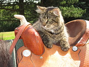 Paws Originals - Cats Ride Free by Jeffrey Koss