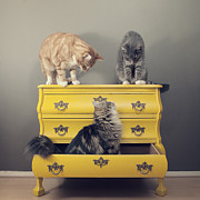 Looking Down Framed Prints - Cats Sitting On Cabinet Framed Print by Paula Daniëlse