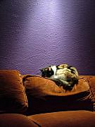 Couch Digital Art - Cats Sleep in Odd Places by Geerah Baden-Karamally