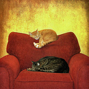 Domestic Animals Posters - Cats Sleeping On Sofa Poster by Nancy J. Koch, Pittsburgh, PA