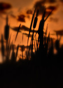Cattails Photos - Cattail Silhouette by Thomas Schoeller