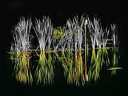 Cattails Framed Prints - Cattails Framed Print by Thomas Young