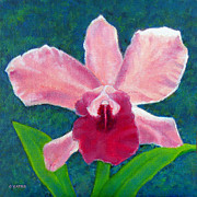 Cattleya Framed Prints - Cattleya Framed Print by Charles Yates