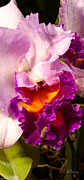 Ocularperceptions Metal Prints - Cattleya III Metal Print by Christopher Holmes