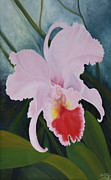 Cattleya Prints - Cattleya Orchid Print by Don  Goetze