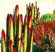 Acrylic Digital Art Acrylic Prints - Catus Garden Acrylic Print by Amy Vangsgard