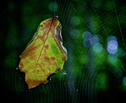 Green Forest Photos - Caught In A Web by Odd Jeppesen