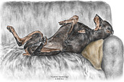 Swan Drawings Prints - Caution Guard Dog - Doberman Pinscher Print color tinted Print by Kelli Swan