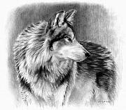 Wolf Drawings Framed Prints - Cautious Eyes Framed Print by Carla Kurt