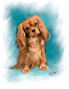 Pup Digital Art - Cavalier King Charles Spaniel Ruby by Maxine Bochnia