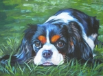 Dog Portrait Paintings - Cavalier King Charles Spaniel tricolor by Lee Ann Shepard