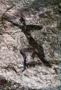 Archery Art - Cave Art, Algeria by Granger