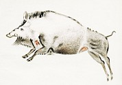 Boar Photos - Cave Painting Of A Boar, Artwork by Sheila Terry