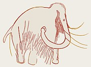 Cognitive Framed Prints - Cave Painting Of A Mammoth, Artwork Framed Print by Sheila Terry