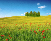 Poppies Field Paintings - Cedar Grove and Poppies by Dominic Piperata