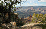South Kaibab Trail Prints - Cedar Ridge - Grand Canyon Print by Juan Romagosa