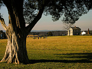 Manassas National Battlefield Park Photos - Cedar Tree and Henry House I by Steven Ainsworth