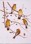 Flock Of Birds Painting Metal Prints - Cedar Waxwing Flock Metal Print by Bill Gehring