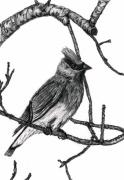 Tennessee Drawings Originals - Cedar Waxwing by Joy Neasley