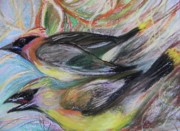 Pair Pastels Metal Prints - Cedar Waxwings Metal Print by Emily Michaud