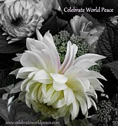 Sian Lindemann - Celebrate World Peace