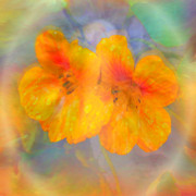 Inspirational Digital Art Originals - Celebration of Life. by Glenyss Bourne