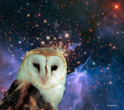 Barn Owl Prints - Celestial Nights Print by Robert Orinski