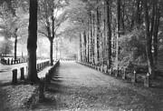 Tree-lined Metal Prints - Cemetery at Ypres  Metal Print by Simon Marsden