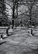 Bare Trees Prints - Cemetery in Winter  Print by Joshua House