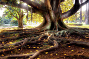 Tree Roots Photo Posters - Centenarian Tree Poster by Carlos Caetano