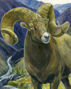 Bighorn Sheep Posters - Centenial Poster by Steve Spencer