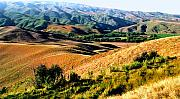 Nz Prints - Central Otago Summer Print by Kevin Smith