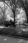 Park Scene Digital Art Prints - CENTRAL PARK CAB in BLACK AND WHITE Print by Rob Hans