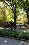 Horse And Buggy Digital Art Posters - Central Park Cab Poster by Rob Hans