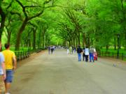 Central Park Photos - Central Park Canopy by Dan Stone