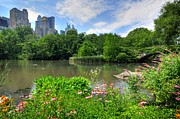 Central Park Landscape Prints - Central Park Print by Kelly Wade