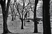 Central Park Prints - Central Park Print by Kenneth Mucke