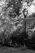 Park Scene Digital Art - CENTRAL PARK LAMP in BLACK AND WHITE by Rob Hans