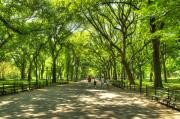 Central Park Prints - Central Park Print by Marc Bittan