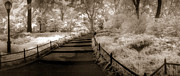Duotone Photos - Central Park Path Duotone by Christine Hauber