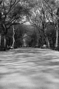 Black And White New York City Prints - Central Park Tree Tunnel Print by Jeff Bord