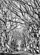 Central Park Photos - Central Park Trees bw by John Rizzuto