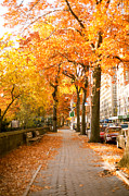 Yellow Leaves Photo Prints - Central Park West Print by Ariane Moshayedi