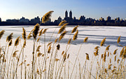 Central Park West Photos - Central Park West In Snow, Manhattan, Ny by Rudi Von Briel